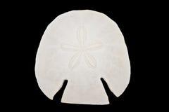 黑色查出的蝴蝶花壳 免版税库存图片