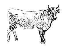 黑色母牛 向量例证