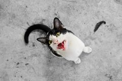 黑色照相机猫凝视白色 免版税库存照片