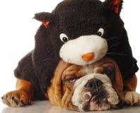 黑色牛头犬猫装饰了 库存图片