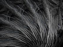 黑色用羽毛装饰白色 库存照片