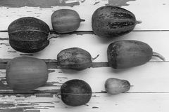 黑色白色 南瓜 秋天 aunumn背景留给在寂静的感恩的生活木 顶视图,拷贝空间 库存图片
