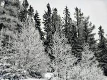 黑色白色 库存照片