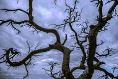 黑色结构树剪影 库存照片