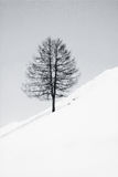 黑色结构树白色 库存照片