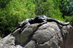 黑色美洲狮 免版税库存图片
