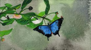 黑色蓝色蝴蝶 免版税库存照片