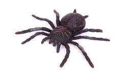 黑色蜘蛛玩具 库存图片