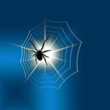 黑色蜘蛛 图库摄影