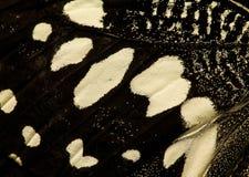 黑色蝴蝶白色翼 免版税库存图片