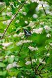 黑色蝴蝶 库存图片