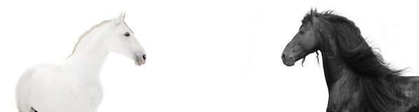 黑色设计标头hors网站白色 免版税图库摄影