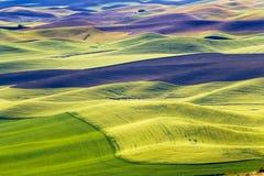黑色调遣绿色地产palouse华盛顿麦子 库存图片