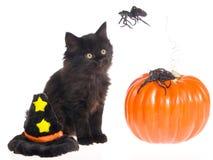 黑色逗人喜爱的万圣节小猫 免版税库存图片