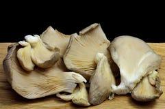 黑色采蘑菇牡蛎 免版税库存照片
