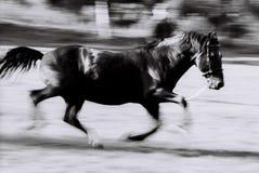 黑色马运行中 库存照片