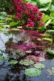 黑色龙lijiang池 库存照片