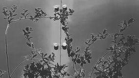 黑色&白色 库存图片