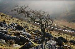 黑色dartmoor突岩 库存照片