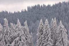 黑色feldberg森林德国 免版税库存照片