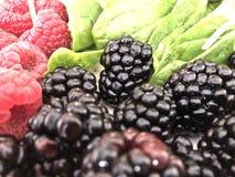黑莓、莓和菠菜 免版税图库摄影