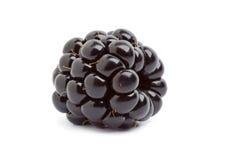 黑莓唯一全部 库存图片