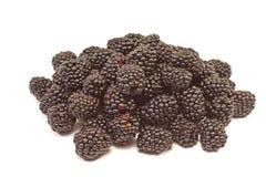 黑莓在白色背景隔绝的果子堆 图库摄影