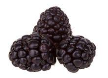 黑莓宏观黑莓的果子 图库摄影