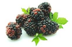 黑莓小叶 免版税图库摄影