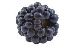 黑莓新鲜一个 图库摄影