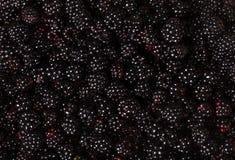 黑莓果子背景 免版税库存照片