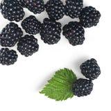 黑莓绿色查出的叶子 库存图片