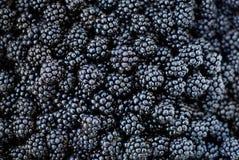 黑莓背景 免版税图库摄影