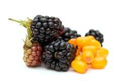 黑莓鼠李海运 免版税图库摄影