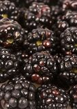 黑莓 免版税库存照片