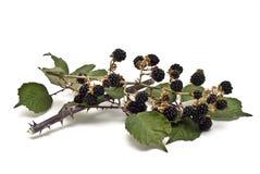 黑莓ii 免版税库存照片