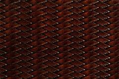 黑褐色snakeskin纹理 库存照片