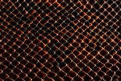 黑褐色snakeskin纹理 免版税库存图片
