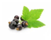 黑醋栗新鲜水果叶子白色 免版税库存照片
