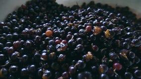 黑醋栗莓果在一个大杯子在 影视素材