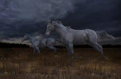 黑马通过干草原疾驰在晚上 库存图片