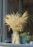 黑麦的耳朵花束  免版税图库摄影