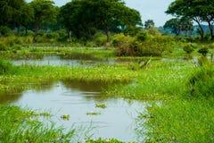 默奇森Falls国家公园,乌干达 库存照片