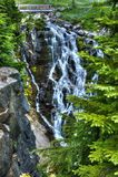 默特尔秋天,瑞尼尔山国家公园 库存图片