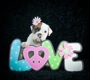 鼓吹爱情与和平的嬉皮士牛头犬小狗 图库摄影
