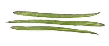 鼓槌蔬菜或辣木科 免版税库存图片
