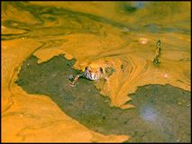 鼓起的蟾蜍黄色 库存照片