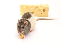 鼠和乳酪 免版税库存照片