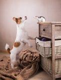 鼠和狗 免版税库存照片