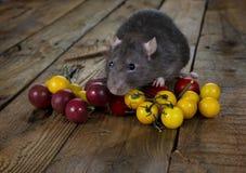 鼠和西红柿 库存图片